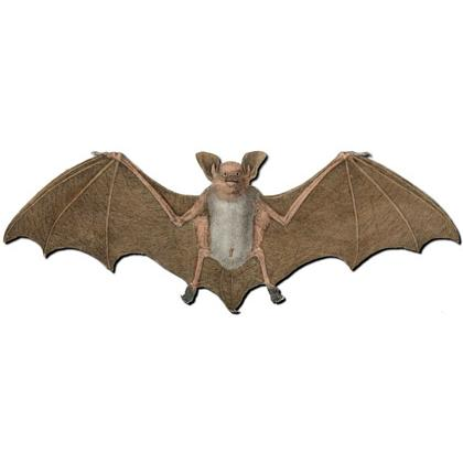 LARGE BAT T-SHIRT Image